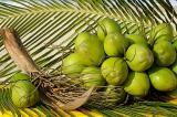 coco verde4