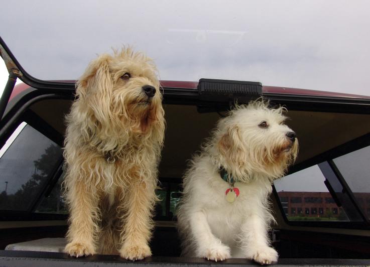 Dogs love trucks!
