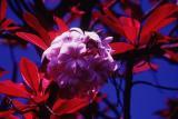 Pretty flower, infrared film