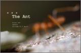 The Ant Story