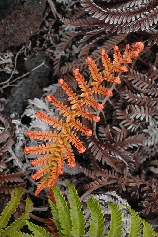 A symphony of ferns