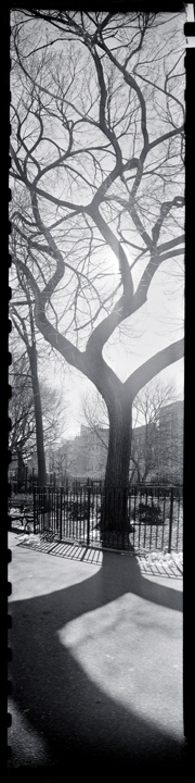 Tree, Thompkins Square