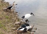 Three different birds