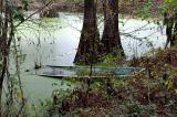 Lost in de Swamp