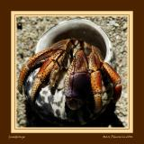Welcome hermit crab to the cruel world