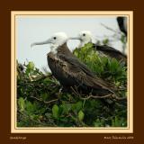 On bird's tree