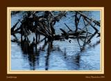 Ripples on dead wood's lake