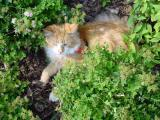 A nice rest in the garden.