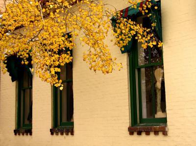 Watching Us, Santa Fe, New Mexico, 2004