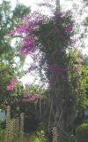 The foliage is so lush!