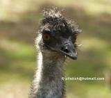 Emusm.jpg