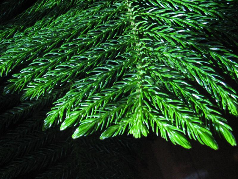 Spines on the frond
