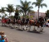 Clydesdales - Coronado 4th of July Parade