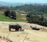 Rhino - San Diego Wild Animal Park