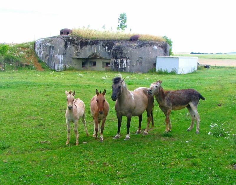 Les nouveaux propriétaires du Bunker , Longuyon