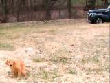 Tennessee Kangaroo