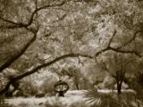 Sepia Dreams 14