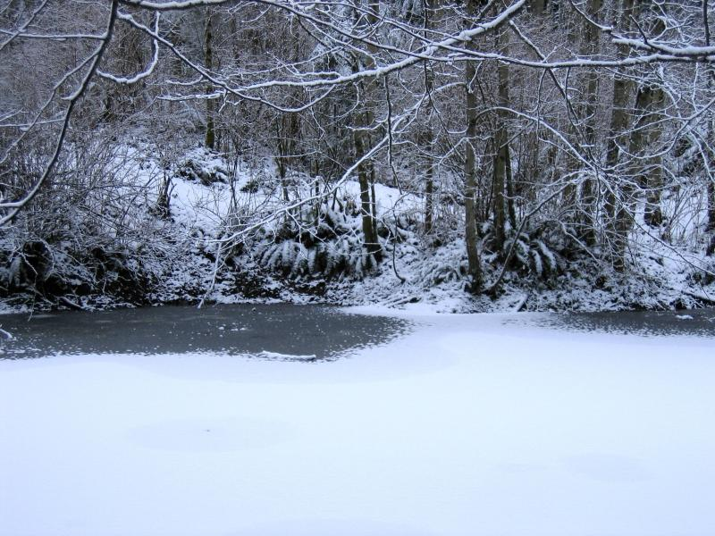 Frozen Pond