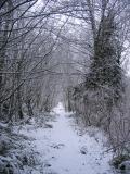 East Fork Trail
