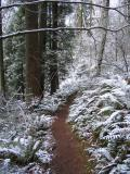 Wilderness Creek Trail