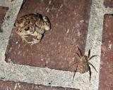 Toad and the Spider.jpg