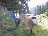 Fellow Hikers, Llama...Look At Dale's Step Dancing, Behind Me