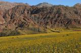 072 Yellow flower carpets, mountains along Jubilee Pass road_1159Ps`0503070917.jpg