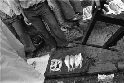 Fish Monger, Tangiers