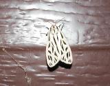 Arge Moth (Grammia arge)