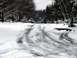 snowy day again ~ January 12th