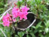 Kleinwalsertal Blumenpracht (woche 29/30 2002)