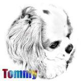 Tommy sketch