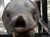 An Elephant Kissed Me