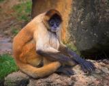Monkey 3469