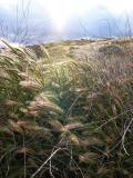 Turning of the Grasses