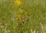 Wild Flower Path