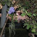 Flower at Sunset 1