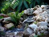 waterfall 2005