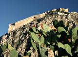 Nafplio - Palamidi Fortress and prickly pear