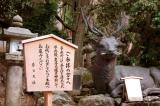 Deer fountain at Kasuga Taisha Shrine