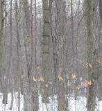 mystery tree rings -- 1