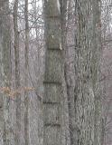 mystery tree rings - 2