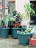 plants3.jpg