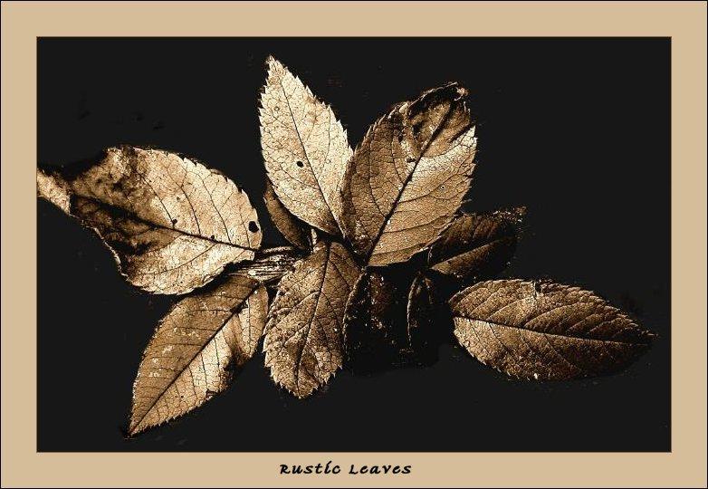 Rustic Leaves