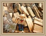 Piling Fire Wood