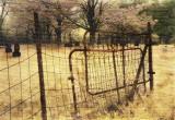 : rusty gate :