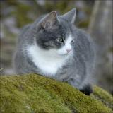 The cat Tuffs