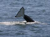 Orca tail cu.jpg