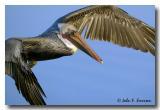 Sea & Wading Birds