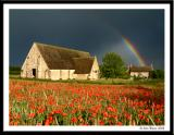 Poppies, Barn and Rainbow
